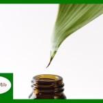 tea-tree-oil-head-lice-Copy1-150x150 Małe błędy kosmetyczne, które sprawiają, że Twoja cera starzeje się zbyt szybko. Jak im przeciwdziałać?