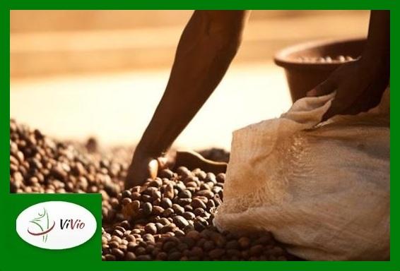tr5-31-Copy MASŁO SHEA - Złoto Afryki w pielęgnacji ciała