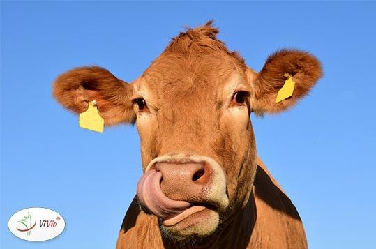 mleko-krowie Mleko krowie vs. mleko roślinne