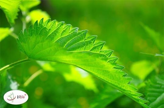 sok-z-pokrzywy Sok z pokrzywy i jego korzystny wpływ na organizm człowieka. Pij na zdrowie!