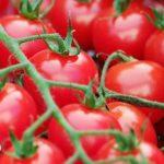 pomidory-150x150 Ciecierzyca – poznaj jej najważniejsze właściwości i możliwości zastosowania