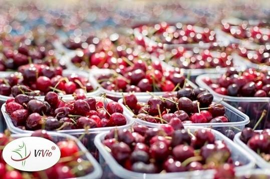 Wyróżniający-ok-1 Czereśnie – jakie wartości odżywcze w sobie skrywają i jak wykorzystać je w naszej kuchni?