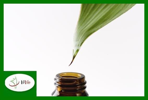 tea-tree-oil-head-lice-Copy1 Powiedz STOP bakteriom! Olejek z drzewa herbacianego