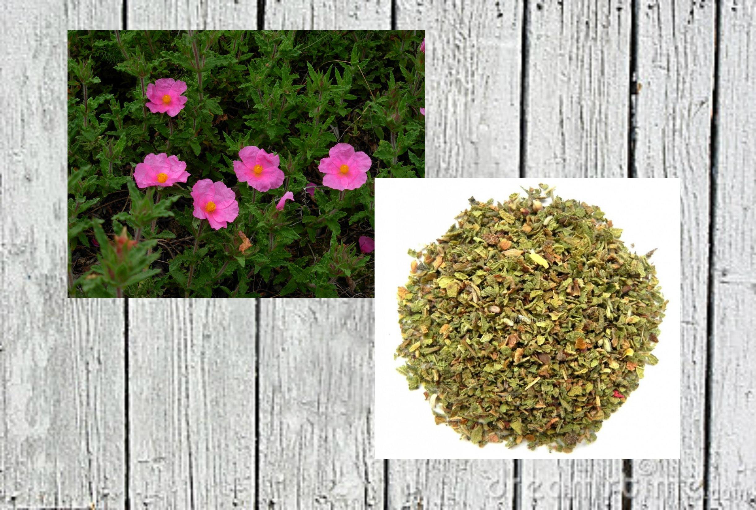 123-2 6 powodów, dla których warto pić herbatę z czystka