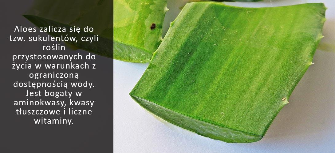 aloes-skladniki-bioaktywne Aloes. Idealne źródło składników bioaktywnych? Przepis na koktajl!