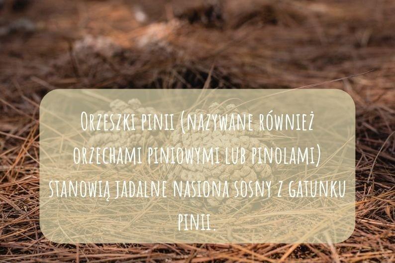 INFOGRAF Orzeszki Pinii – jako dodatek do pizzy, sałatki i makaronu