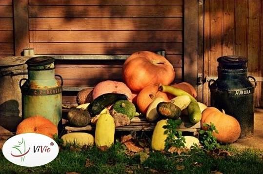 Wyróżniający-ok Dynia w trzech odsłonach – dlaczego warto wprowadzić ją do swojej diety?