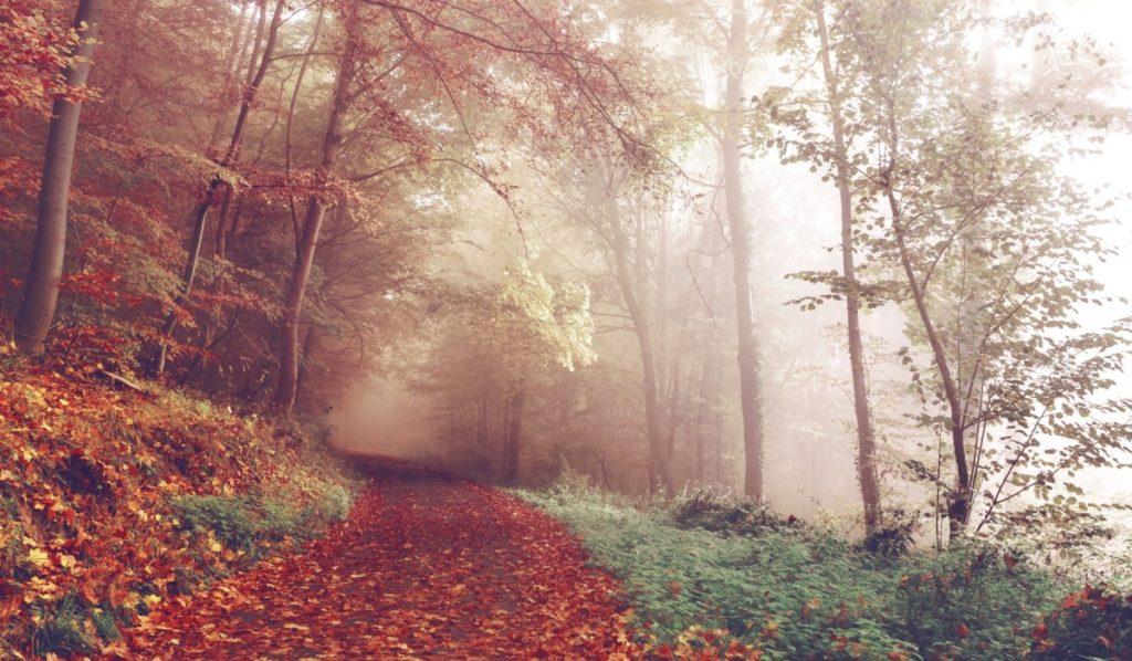 path-1031114_1920-1024x598 Jak zachować zdrowie i dobre samopoczucie w czasie jesiennych dni?