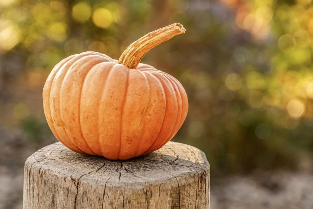 pumpkin-4454745_1920-1024x683 Dynia w trzech odsłonach – dlaczego warto wprowadzić ją do swojej diety?