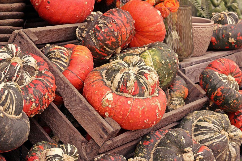 pumpkin-4465394_1920-1024x683 Jak przygotować zdrowe przekąski na domowe przyjęcie halloweenowe?