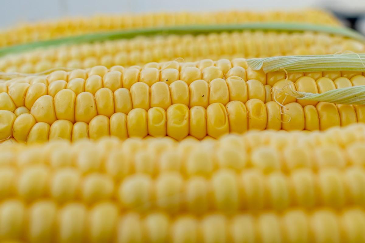 15.1 Skrobia kukurydziana czy mąka? - sprawdź różnice, właściwości, zastosowania